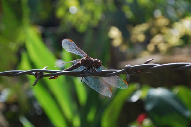 A dragonfly up close