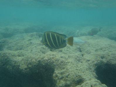 Snorkeling at Hanauma Bay